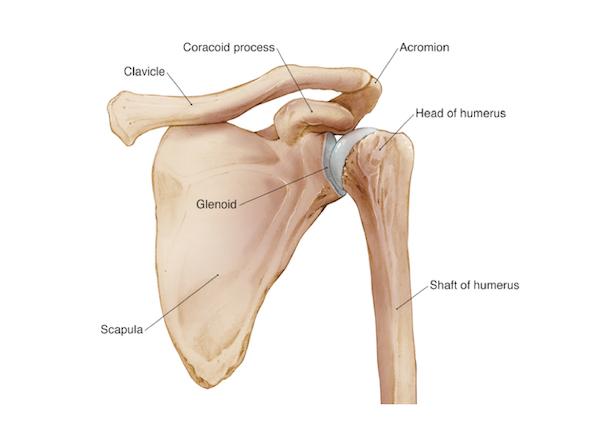شکستگی شانه ارتوپدی جراحی تعویض شانه